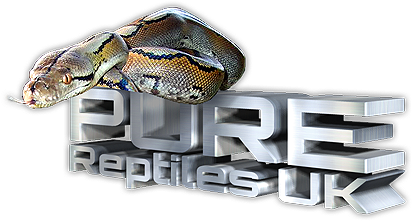 PURE Reptiles UK logo